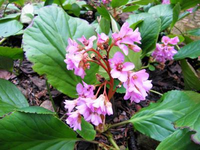 Foto zur Meldung: Freude über vorgezogene Frühlingsblüte ist mit Sorge gemischt