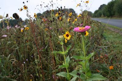 Vorschaubild zur Meldung: Biotopfond bittet wieder um Anlage/ Erhalt von Blühflächen