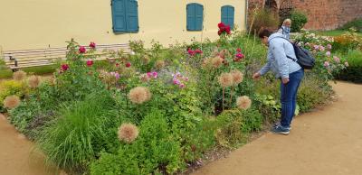 Foto zur Meldung: Pflegearbeiten auf den Rosenbeeten sind angelaufen