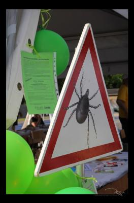 Vorschaubild zur Meldung: Vorsicht Zecken - Gefahren nicht nur für Kinder (SH-NEWS 2020/032 vom 08.04.2020)