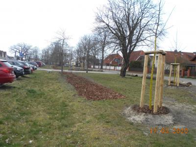 Vorschaubild zur Meldung: 50 neue Bäume und über 300 neue Sträucher