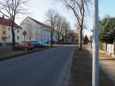 Vorschaubild zur Meldung: Mein Freund der Baum - Anmerkungen von Fürstenwaldes Baumexperten zum Tag des Baumes am 25. April