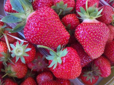 Vorschaubild zur Meldung: Ab heute die ersten Erdbeeren