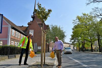 Vorschaubild zur Meldung: Bürgermeister Meger ruft Bürger zum Bäume gießen auf
