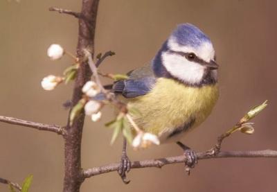 Foto zur Meldung: Drei Tage lang Stunde der Gartenvögel