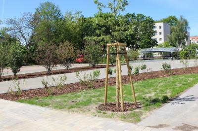 Vorschaubild zur Meldung: Baumaßnahmen an der Waldring-Grundschule abgeschlossen