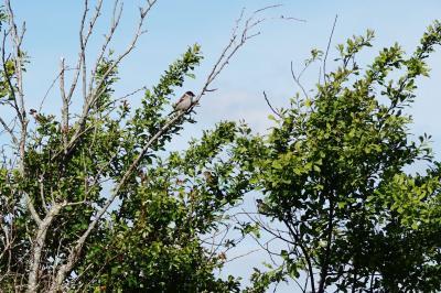 Foto zur Meldung: Viele fleißige Zähler bei der Stunde der Gartenvögel