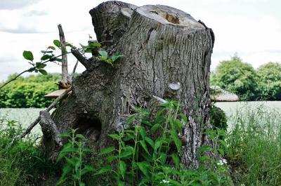 Foto zur Meldung: Schöne Baumpilze auf dem Segeberger Kamp