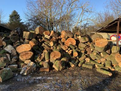 Foto zur Meldung: Holzverkauf