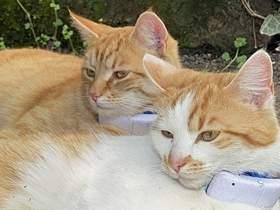 Vorschaubild zur Meldung: Katze Rosa schon wieder angeschossen