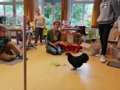 Vorschaubild zur Meldung: Ein Huhn zu Besuch an der Grundschule