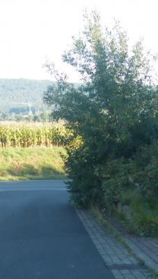 Überhängende Hecke bzw. Baum