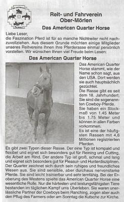 Vorschaubild zur Meldung: Rasseportrait American Quarter Horse