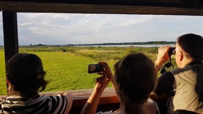 """Vorschaubild zur Meldung: """"Mondschein-Erlebniswanderung"""": Von Netzen zum Vogel-Beobachtungsturm am Streng, durch die Salzwiesen und dem Rietzer Seengebiet"""