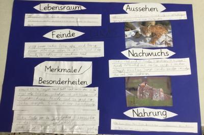 Vorschaubild zur Meldung: Klasse 3a: Waldtierplakate