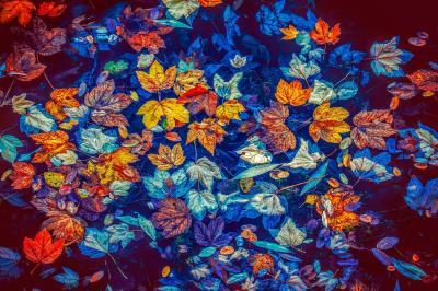 Vorschaubild zur Meldung: Wir wünschen schöne Herbstferien!