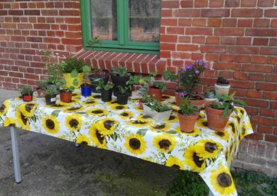 Foto zur Meldung: Pflanzentauschbörse und kleiner Flohmarkt