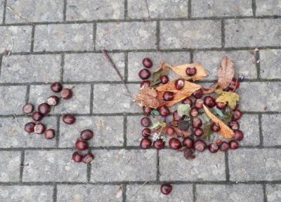 Foto zur Meldung: Herbstmandalas der Klassen 1