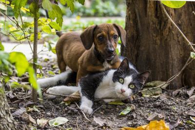 Unterbringung von aufgefundenen Hunden und Katzen