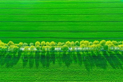 Das Foto der Eichenallee bei Seedorf belegt den ersten Platz beim BUND-Fotowettbewerb  © Anja Möller