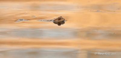 Vorschaubild der Meldung: Alle weg? Was machen Amphibien eigentlich im Winter?