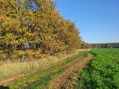 Foto zur Meldung: Herbst auf dem Pernitzer Hof