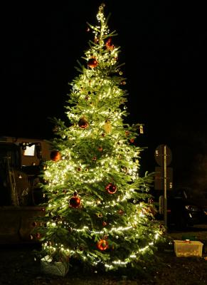 Foto zur Meldung: Schmalensee – wir haben einen Weihnachtsbaum
