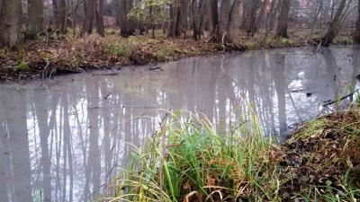 Foto zur Meldung: Wassermangel führt zum Fischsterben in Zülowseen