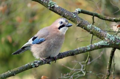 """Foto zur Meldung: NABU-Mitmachaktion """"Stunde der Wildvögel"""" vom 8. bis zum 10. Januar"""