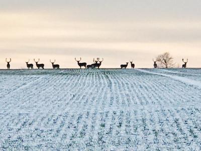 Foto zur Meldung: Das macht wohl der Winter: Derzeit ist viel Wild zu sehen