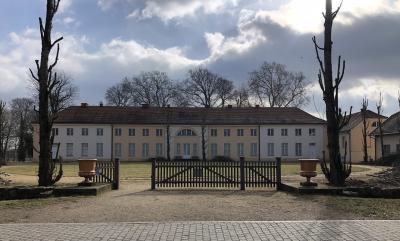 Foto zur Meldung: Baumschnitt am Pappelrondel vor dem Schloss Paretz