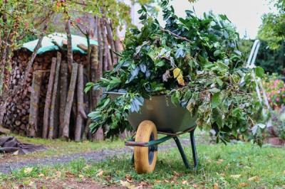 Entsorgung von Baum- und Strauchschnitt