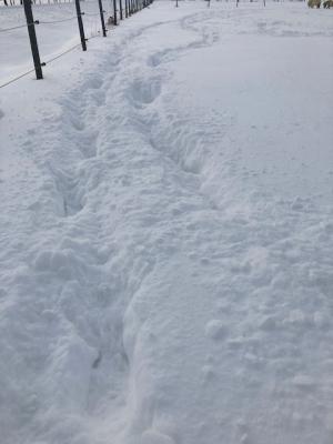 Minishetty-Spuren im tiefen Schnee. Blöd, wenn der Bauch schleift ;-)