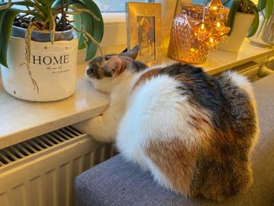 Foto zur Meldung: Vor 90 Jahren: Die Zeitung veröffentlicht eine Katzengeschichte aus Schmalensee