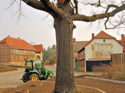 Unfriede an der alten Eilsleber Dorfeiche
