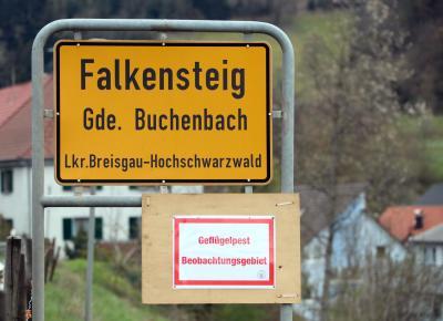 Auch die Gemeinde Buchenbach im Landkreis Breisgau-Hochschwarzwald gehört zum Beobachtungsgebiet für die Vogelpest - Foto: Hahne / johapress