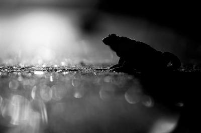 Vorschaubild der Meldung: Studie zu bedeutendsten ungesicherten Amphibienquerungen in Thüringen