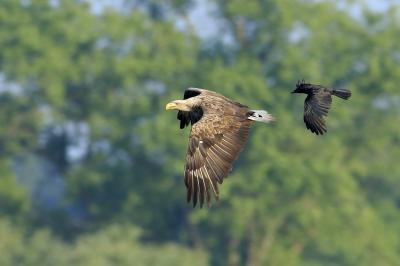 Foto zur Meldung: Besuch beim Naturpark-Tier 2021 am 15. Mai