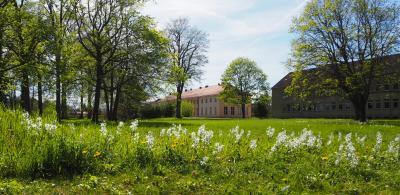 Foto zur Meldung: Der Nickende Milchstern blüht im Schlossgarten zu Paretz und der Grottenberg grünt