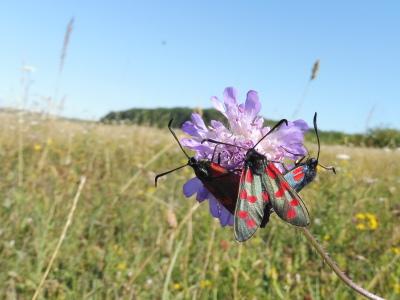 Tipps zur insektenfreundlichen Grünlandbewirtschaftung