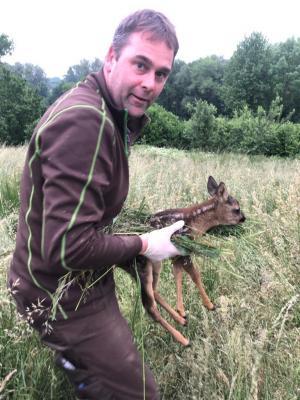 Bambi-Retter