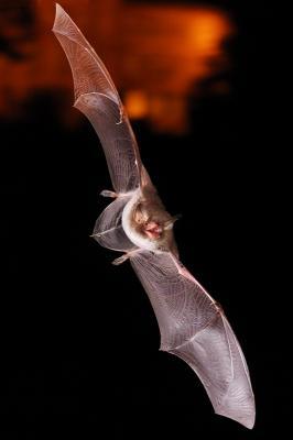 Foto zur Meldung: Fledermaus-Entdeckungsreise im Plöner Schlossgebiet am 21. August