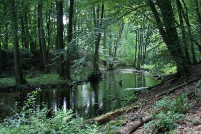 Foto zur Meldung: Naturpark-Wanderung am 12. September bei Altenkrempe