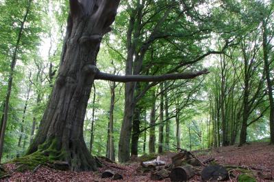 Foto zur Meldung: Naturpark: Erlebnisspaziergang durch den Nehmtener Wald am 15. September