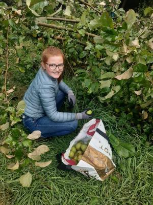 Apfelernte im Schulwald voller Erfolg