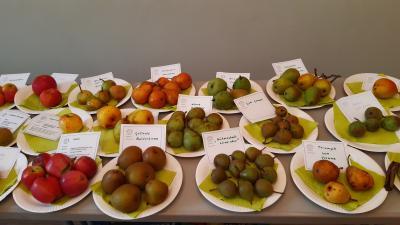 Foto zur Meldung: 2. Apfelfest im Haus Am Markt 3