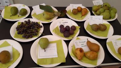 Foto zur Meldung: Das Apfelfest war ein voller Erfolg - der nächste Termin steht schon fest!