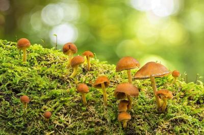 Foto zur Meldung: Zeit für Pilze im Naturpark am 2. und 9. Oktober