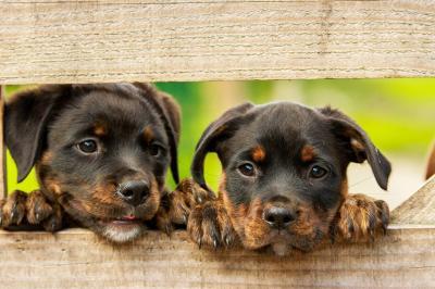 Foto zur Meldung: Tierkauf im Internet verursacht Tierleid