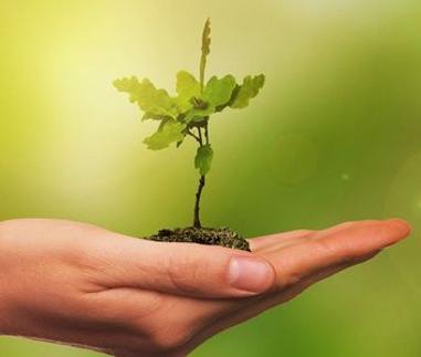 19.10.2021   Baumpflanzaktion - 100 neue Bäume für den angrenzenden Kitawald